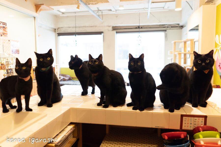 黒猫だけの保護猫カフェ「ねこびやか」の黒猫写真