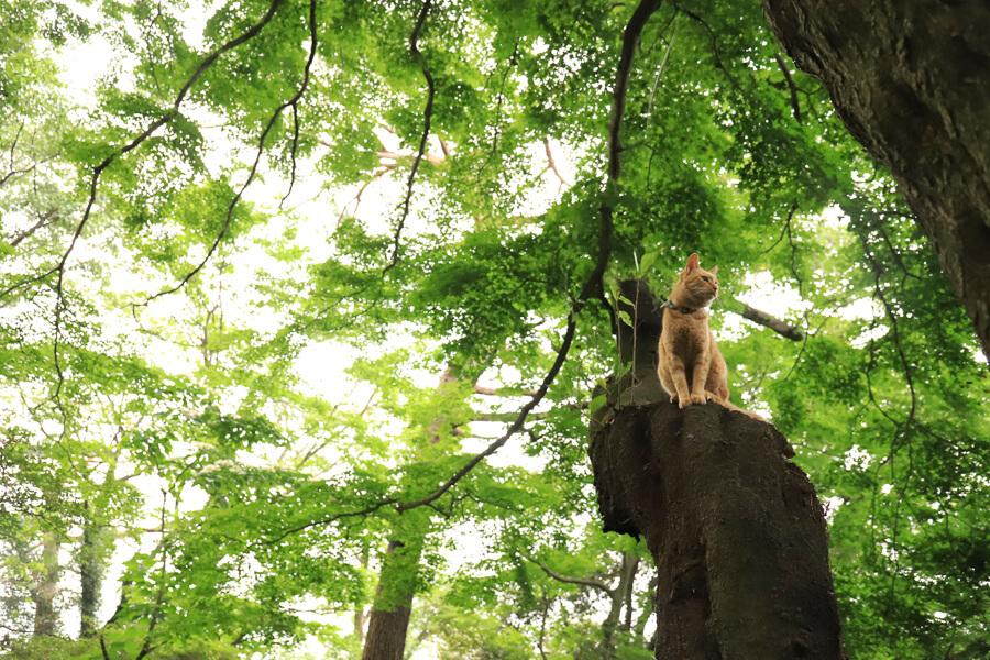 森の中でくつろぐ猫の写真 by きょーこ♪&のぼう