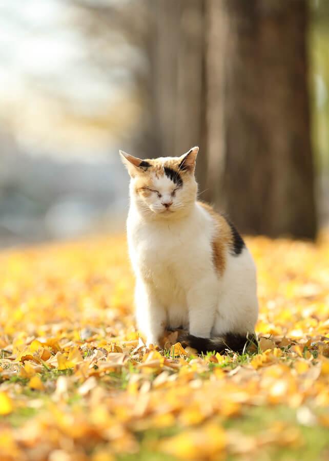 黄色い落ち葉の上で佇む猫の写真 by mocha