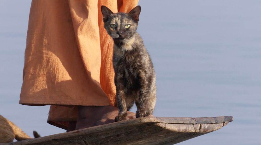 ボートに乗って湖上を移動する猫 by 『劇場版 岩合光昭の世界ネコ歩き あるがままに、水と大地のネコ家族』