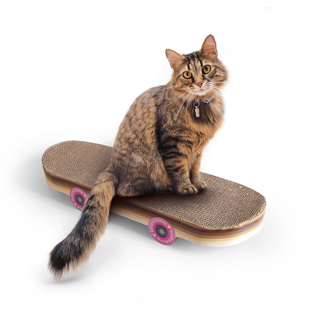 スケートボード型の爪とぎ「Cat Scratch Skateboard」に座る猫