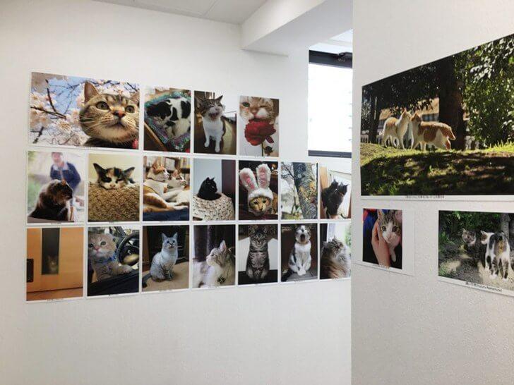 もふあつめ展の一般公募写真の展示風景