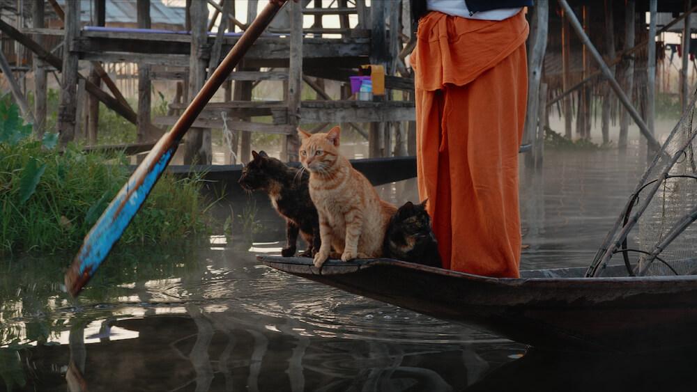 ミャンマーのインレー湖で暮らすネコ by 映画『劇場版 岩合光昭の世界ネコ歩き あるがままに、水と大地のネコ家族』のワンシーン