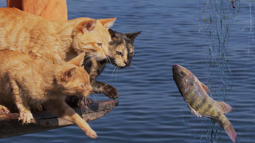網にかかった魚を捕まえようとする猫 by 『劇場版 岩合光昭の世界ネコ歩き あるがままに、水と大地のネコ家族』