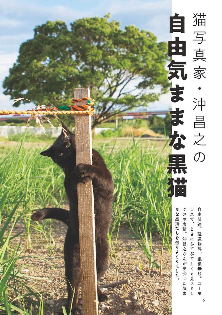 沖昌之の「自由気ままな黒猫」 by 雑誌「黒猫まみれ」