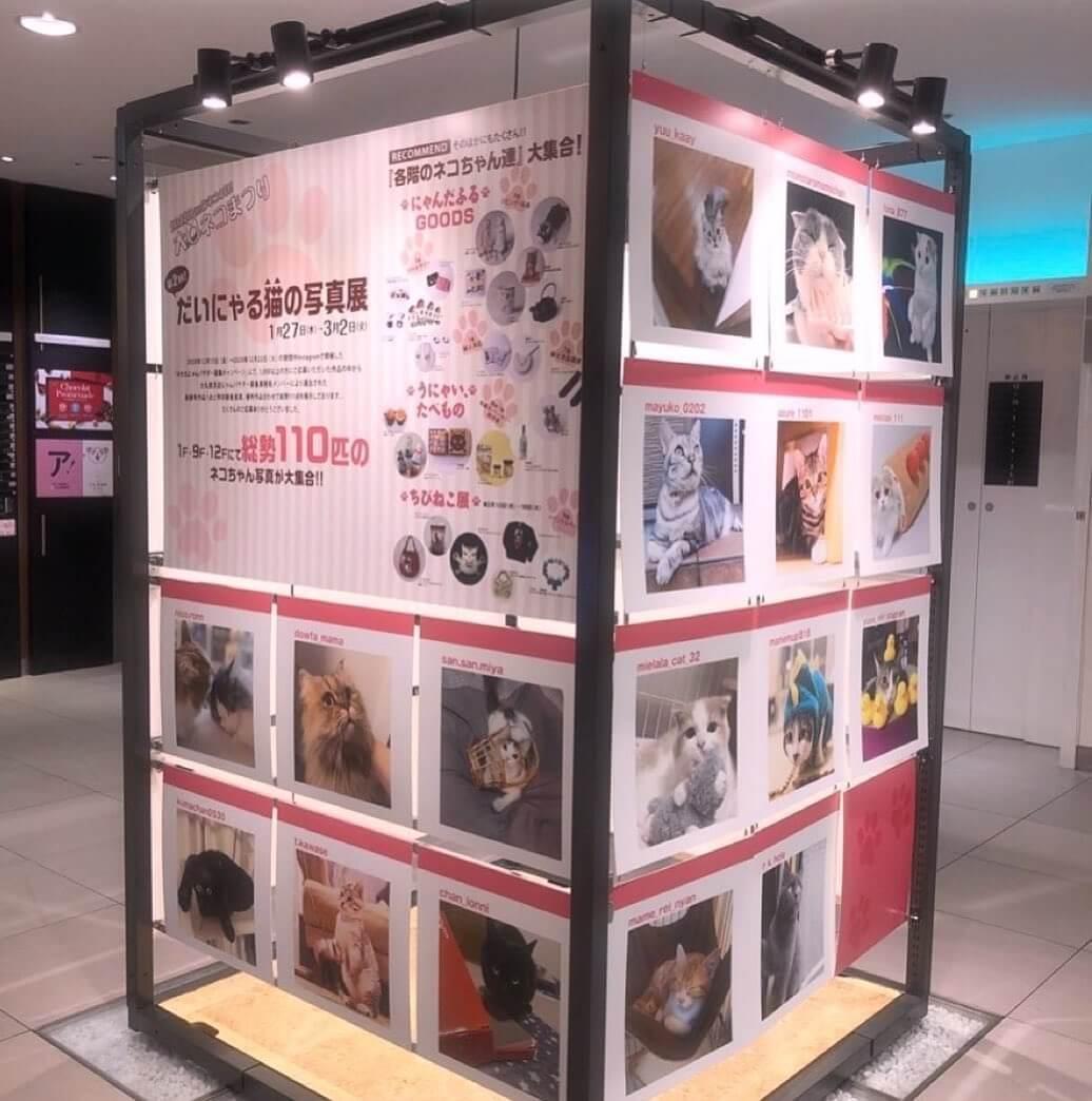 「第2回 だいにゃる猫の写真展」の展示風景 in 大丸東京店