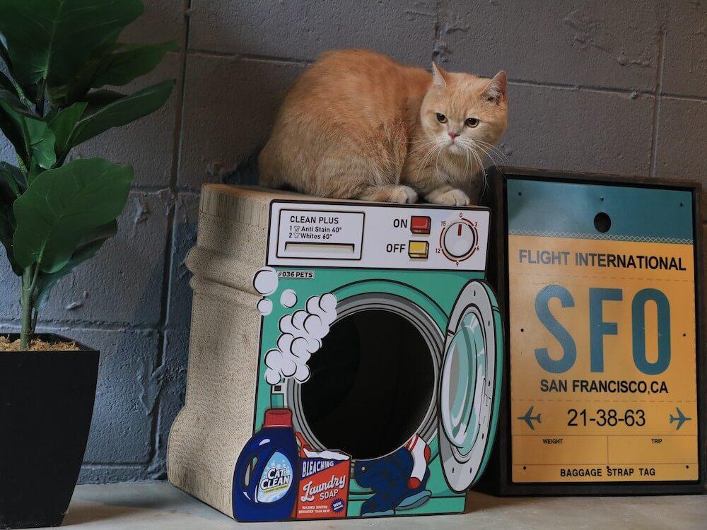 洗濯機型の爪とぎ猫ハウス「爪とぎ Laundry」の上に乗る猫