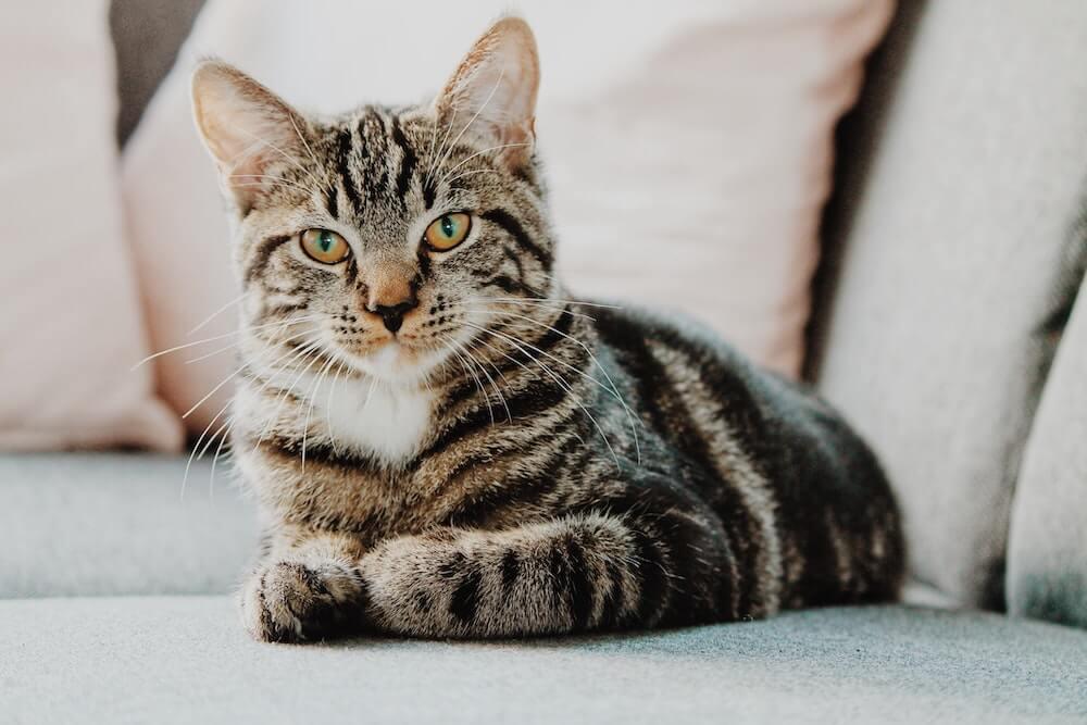 高齢猫のイメージ写真