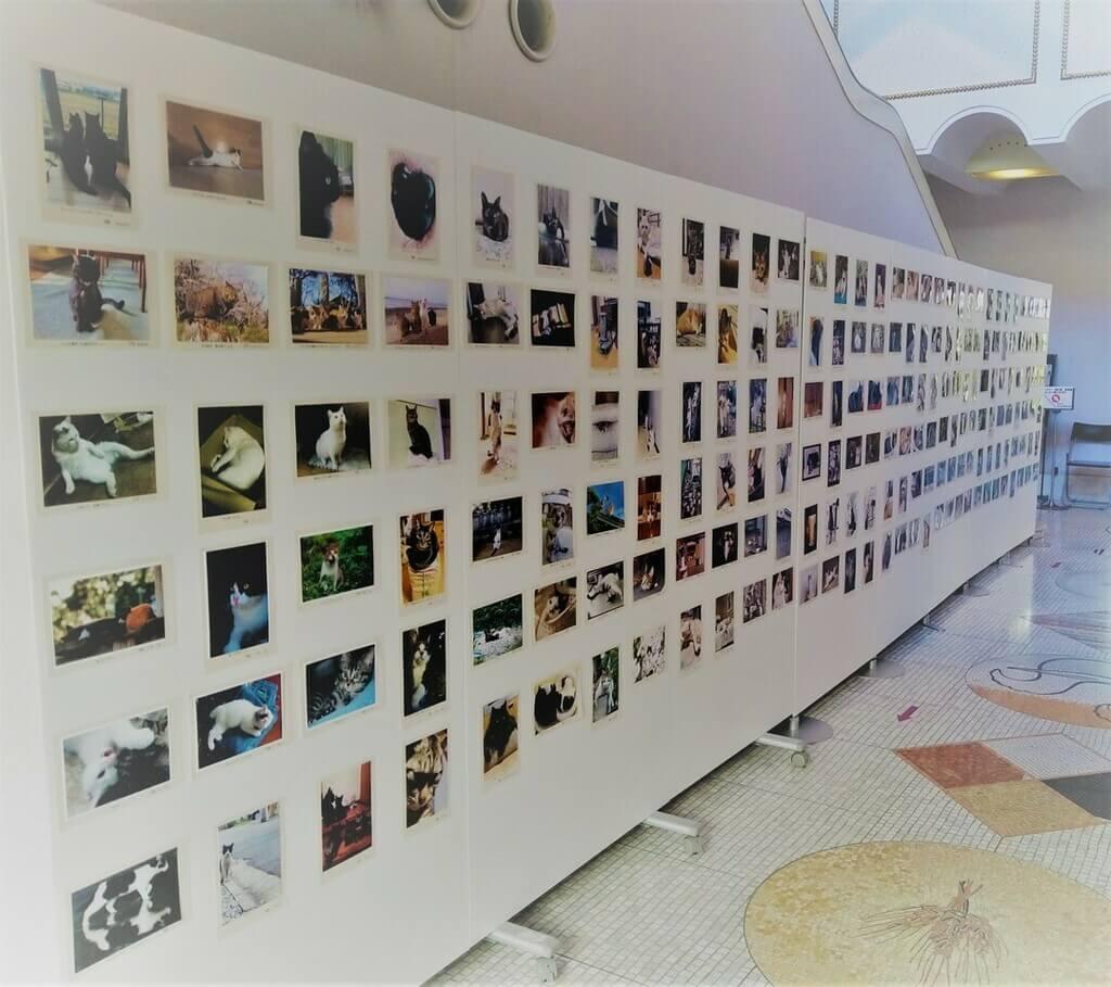 「大佛次郎×ねこ写真展2021」の猫写真展示イメージ