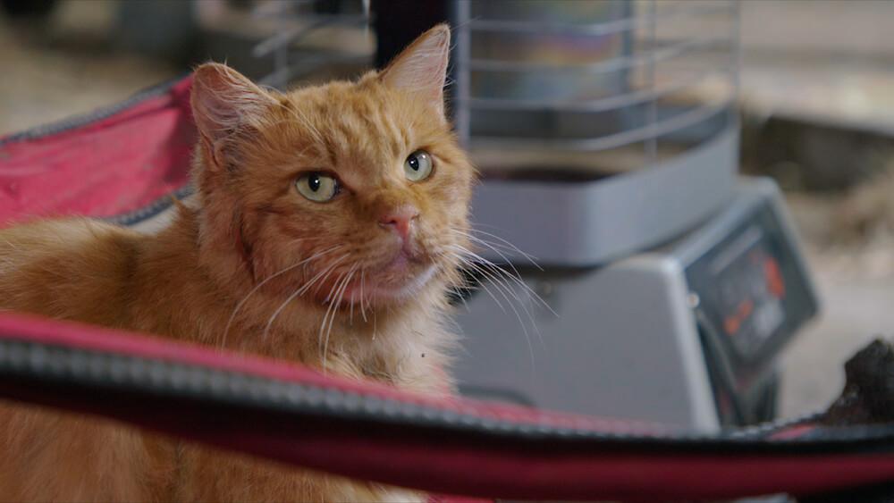 映画『劇場版 岩合光昭の世界ネコ歩き あるがままに、水と大地のネコ家族』に登場する茶トラ猫