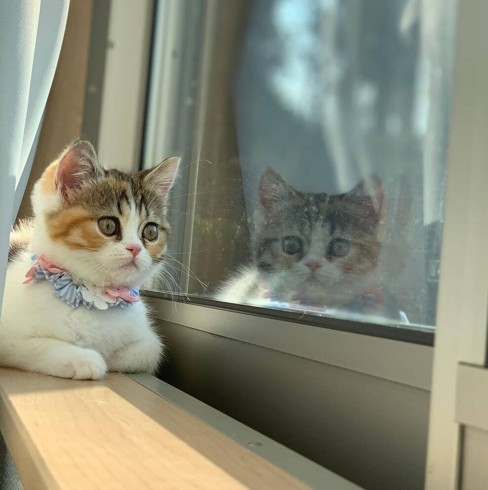2代目大丸にゃんバサダーに選ばれた、窓の外を夢中で眺めている猫の写真