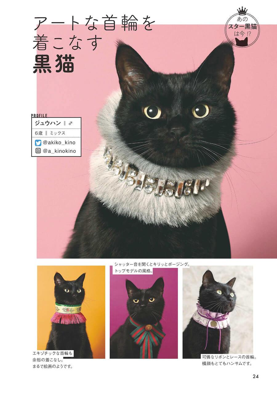「あのスター黒猫は今!?」 by 雑誌「黒猫まみれ」