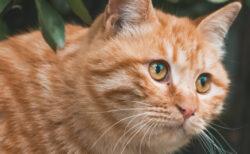 【2021年版】猫の日企画まとめ!ラーメンからディズニーまで注目の猫グッズ&サービスを紹介