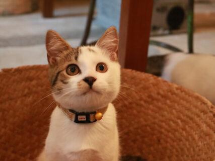 旅先で出会った子猫にフォーカス!猫を求めて訪ね歩く紀行番組「旅猫ロマン」が傑作選を放送