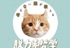ネコが人生の役に立つ名言をゆる~く解説!哲学入門書『考えない猫が教える脱力系哲学の言葉』