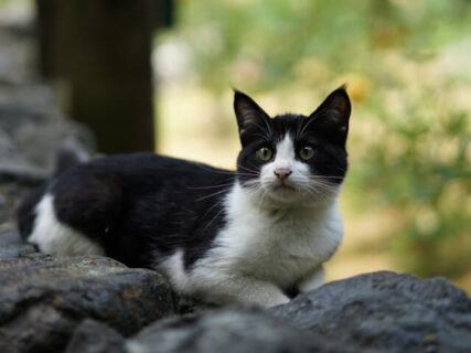 紀行番組「旅猫ロマン」の傑作選、第2話はバラが咲き誇るローズガーデン&庭園美術館に暮らす猫たち