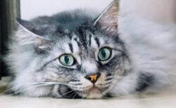 最優秀賞はアマギフ10万円+CIAOちゅ~る120本!アドビが猫の写真&動画コンテストを開催中