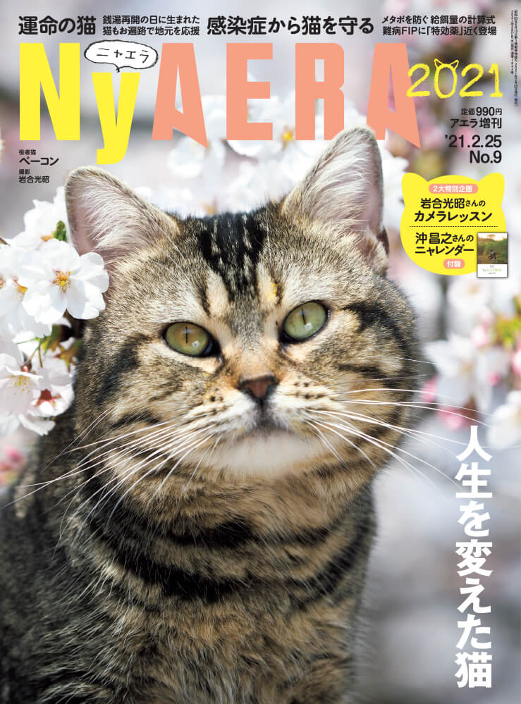 AERA(アエラ)が猫化する臨時増刊号「NyAERA(ニャエラ) 2021」表紙イメージ