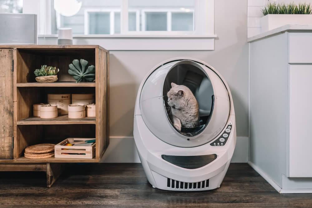 全自動の猫トイレから出てくる猫のイメージ写真