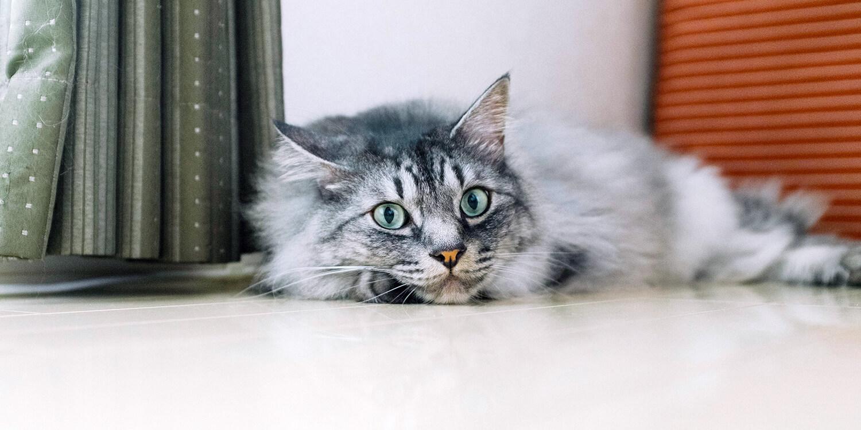Adobe(アドビ)の「猫フォト&ムービーコンテスト」メインビジュアル