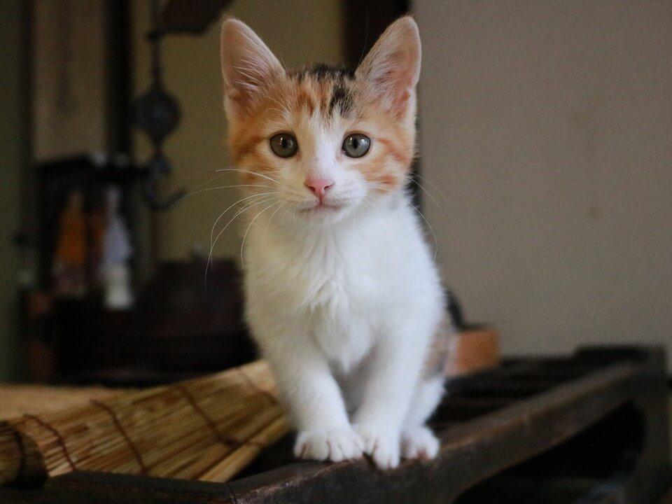 猫を求めて訪ね歩く紀行番組「旅猫ロマン」の傑作選