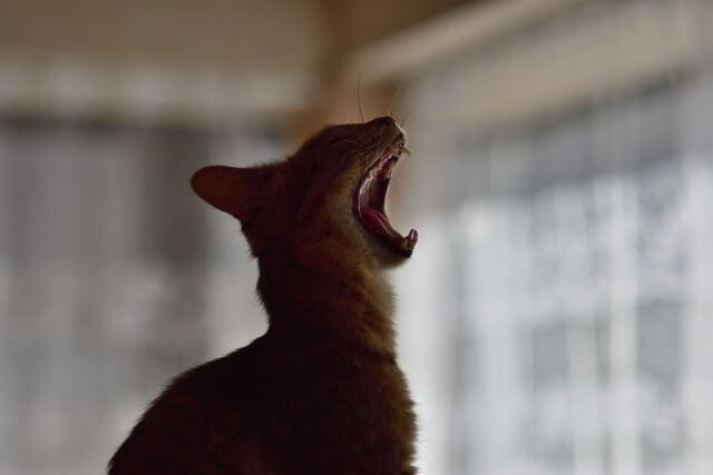 退屈そうな猫のイメージ写真