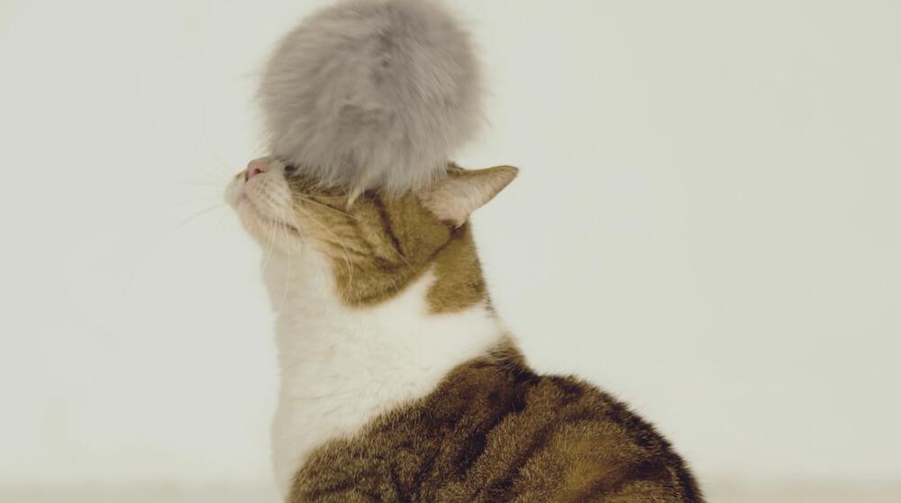 猫型ドローン「にゃろーん」に取り付けた猫じゃらしと遊ぶ猫2