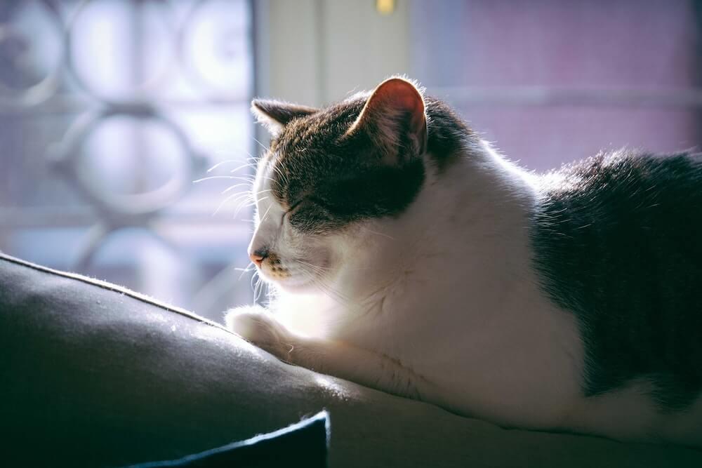 目を瞑る猫を見守るイメージ写真