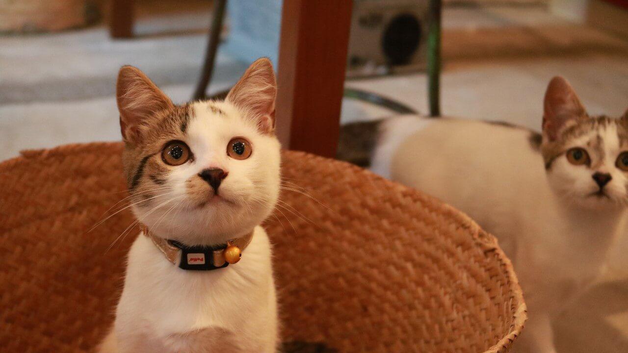 横須賀のお菓子屋さんで暮らす猫 by 紀行番組「旅猫ロマン」傑作選第一話