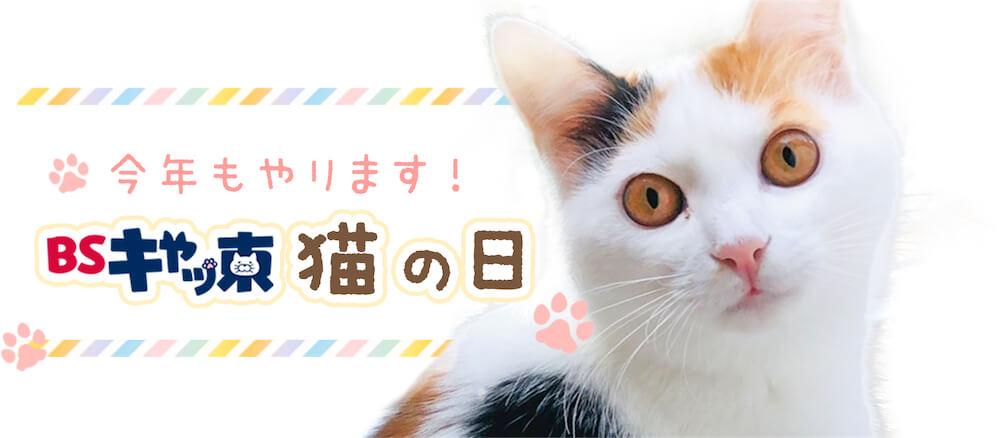 BSテレ東の猫の日企画「BSキャッ東」2021年メインビジュアル