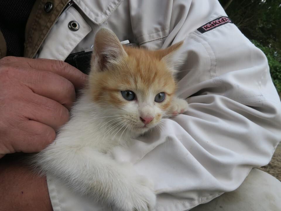 妻籠宿で出会った生後1ヶ月の子猫 by 旅猫ロマン