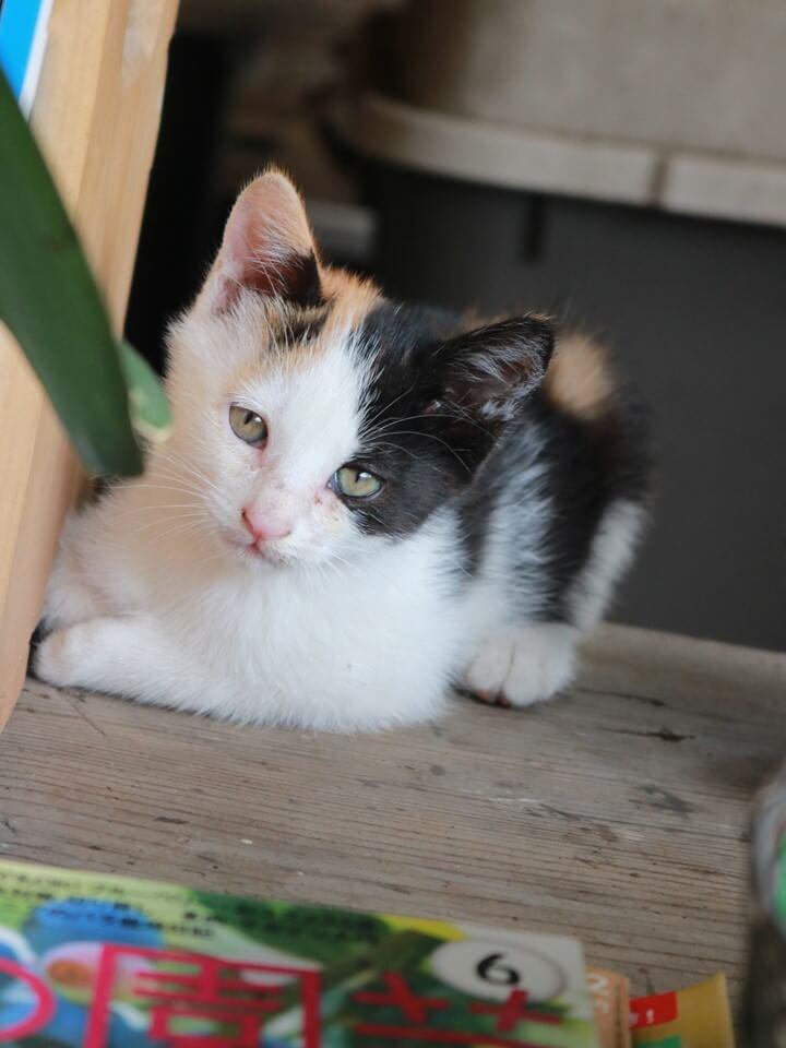 紀行番組「旅猫ロマン」傑作選の第一話に登場する猫のイメージ