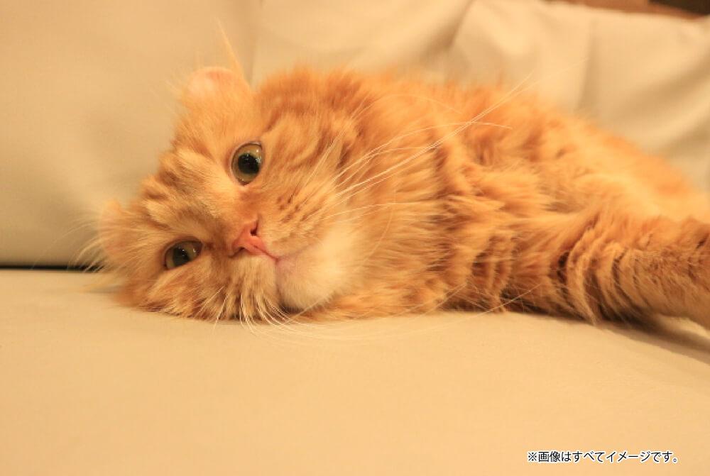 猫カフェ MOCHA 名古屋栄店の猫スタッフ