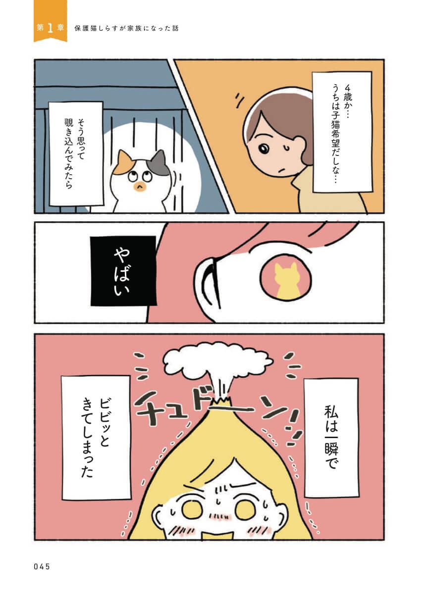 著者のオキエイコさんが保護猫のしらすと運命の出会いを果たすシーン by ねこ活はじめました