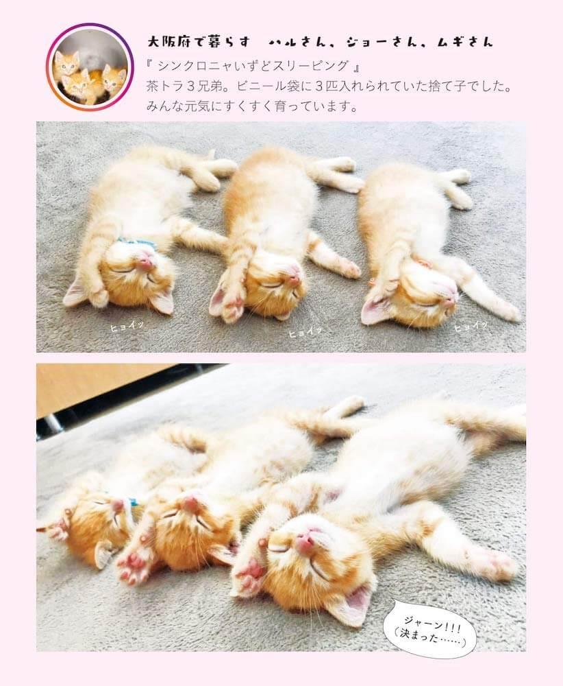 同じ姿勢でへそ天をする3匹の茶トラ猫 by 写真集「へそ天にゃんこ2」の中面イメージ