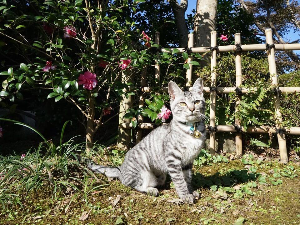 松山庭園美術館で暮らす保護猫 by 旅猫ロマン