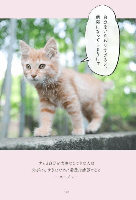 ニーチェの名言「ずっと自分を大事にしてきた人は大事にしすぎたために最後は病弱になる」の猫語による解説