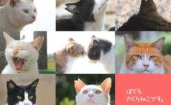 今年も3月22日は「さくらねこの日」殺処分をなくす取組&手術済みの猫を知ってもらう記念日