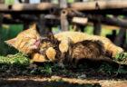ネコの家族愛を捉えた写真展「劇場版 岩合光昭の世界ネコ歩き あるがままに、水と大地のネコ家族」展示作品イメージ