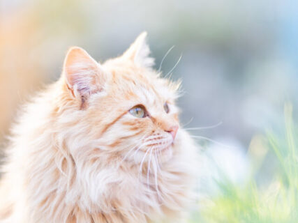 話題の立ち猫から海辺の猫まで!13名の写真家によるネコの写真展「ニャン都物語2021」横浜で開催