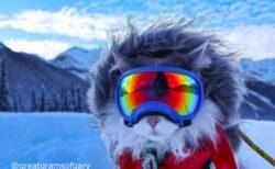 ゴーグル姿が超かっこいい!カナダで暮らす猫の「ゲイリー」くんはスキーも楽しむアウトドア派