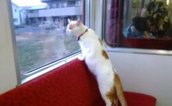 トリンドル玲奈も猫にメロメロ!走行中の電車で猫とふれあえる「ねこカフェ列車」第2弾が開催決定
