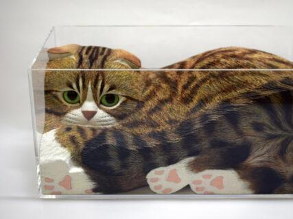 透明な箱に入っているのは…木彫りの猫!注目作家のアート作品を集めた『猫・ネコ・ねこ展』大阪で開催