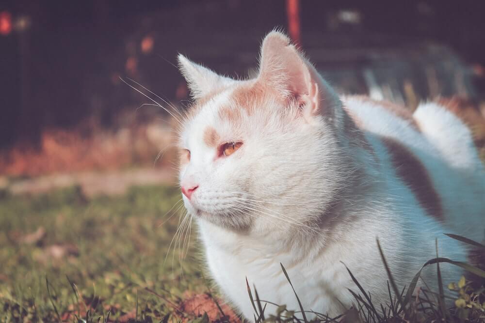 外猫のイメージ写真