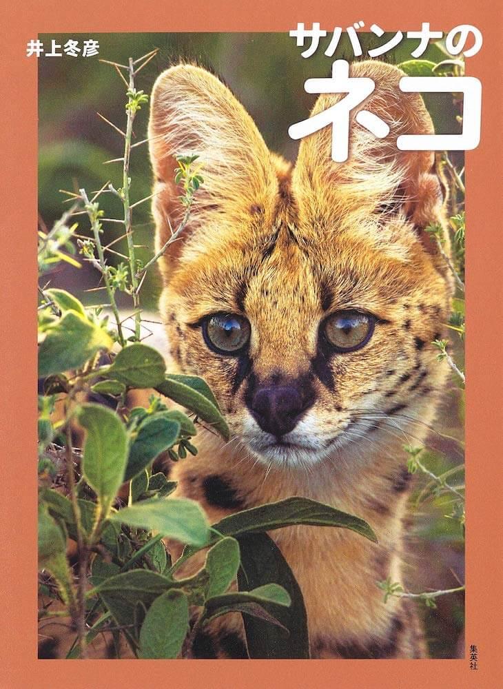 サーバルなどのネコ科動物を収録した写真集『サバンナのネコ』の表紙イメージ by 自然写真家・井上冬彦