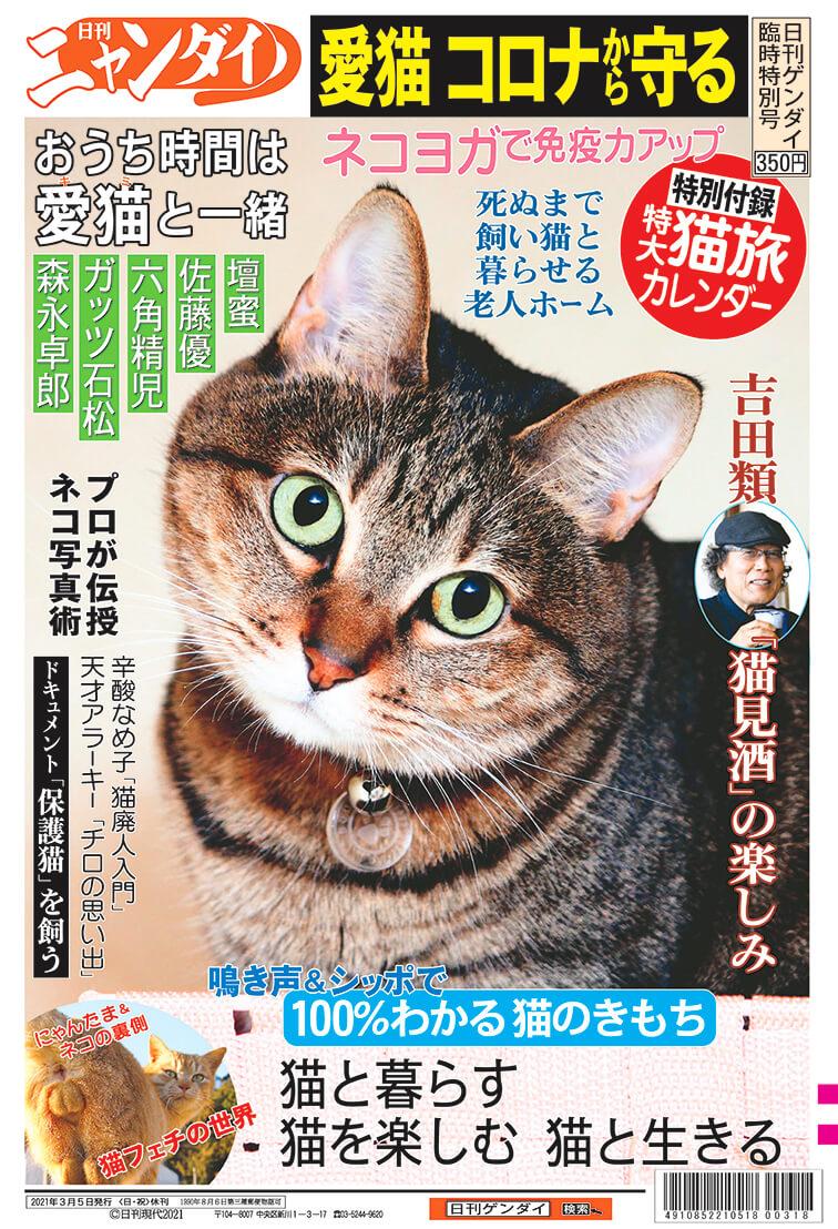 夕刊紙・日刊ゲンダイの猫まみれ臨時特別号『日刊ニャンダイ』表紙イメージ