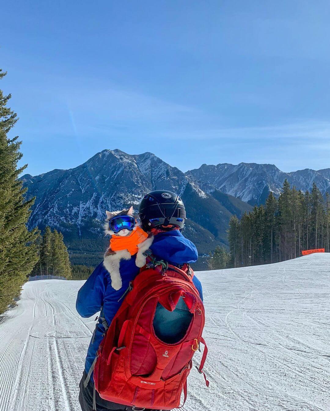 飼い主さんの肩に乗ってスキーを楽しむ猫のゲイリーくん in カナダ キャンモア