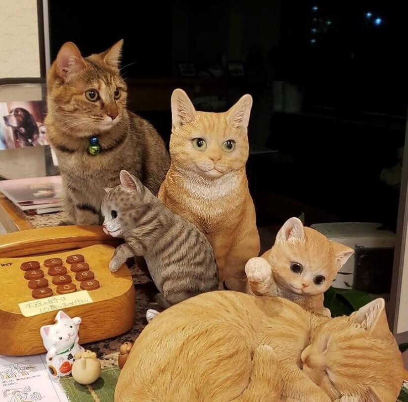 飯坂温泉にある「おきな旅館」の看板猫「セイちゃん」