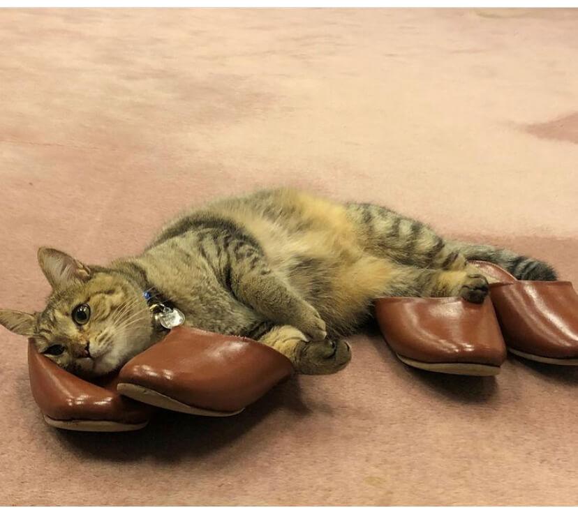 飯坂温泉にある「おきな旅館」の看板猫「セイちゃん」 がスリッパを温めているシーン