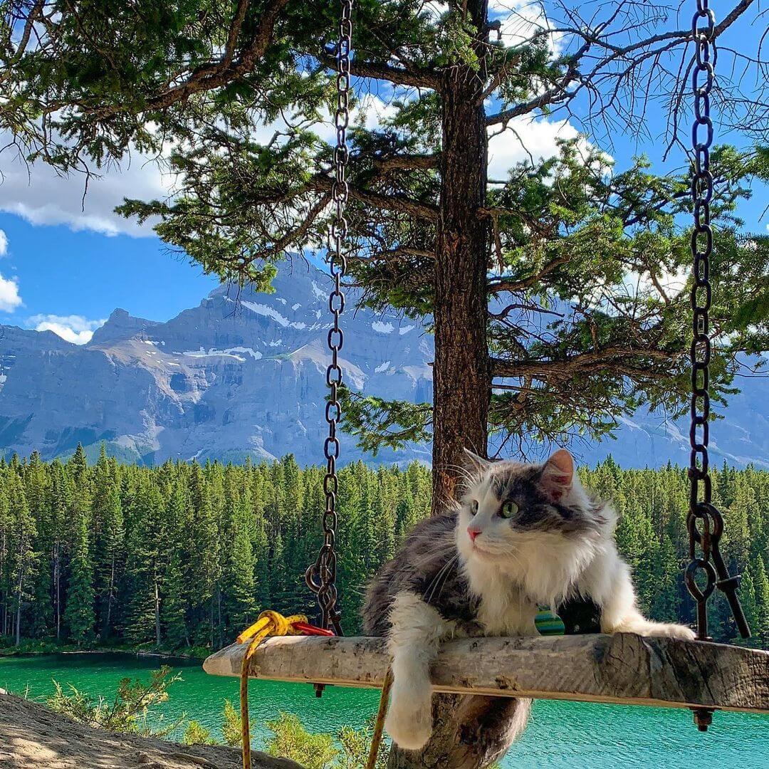 カナダのキャンモアで暮らす猫のゲイリーくん